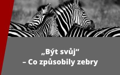 """""""Být svůj"""" – Co způsobily zebry"""